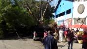 Chute d'un arbre géant à Port-au-Prince sans faire de victimes