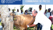 Le bétail de 2.500 familles agricoles bénéficie de soins vétérinaires de la FAO à travers les cliniques mobiles vétérinaires